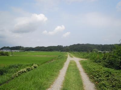 花水川左岸160720