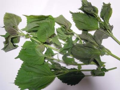 荏胡麻の葉っぱ160725