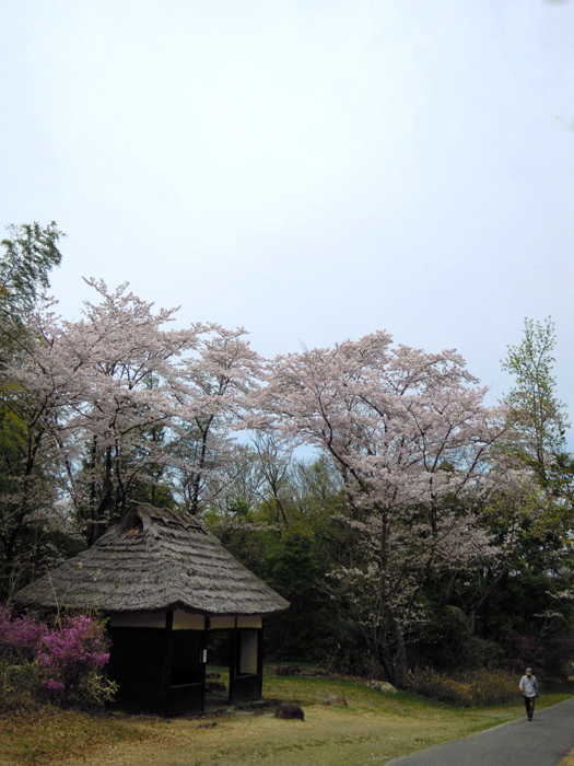 愛知県森林公園の30番の東屋。