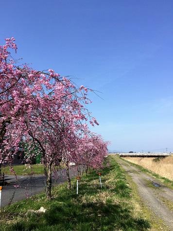 春って寂しい・・・・