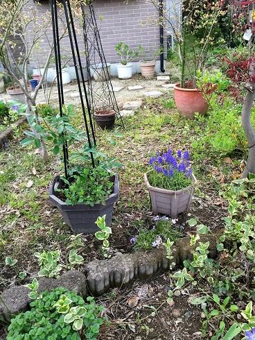 庭がオオバラ