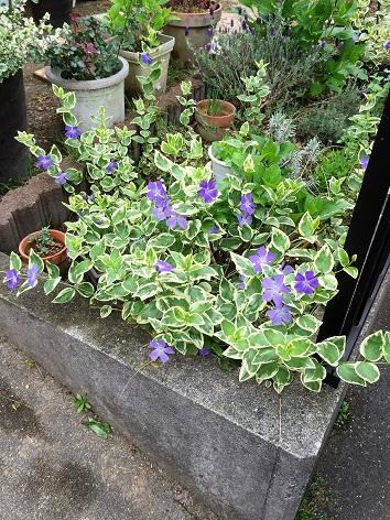 花壇もにぎやかに^^