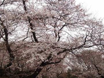 武蔵野の森公園 (1)
