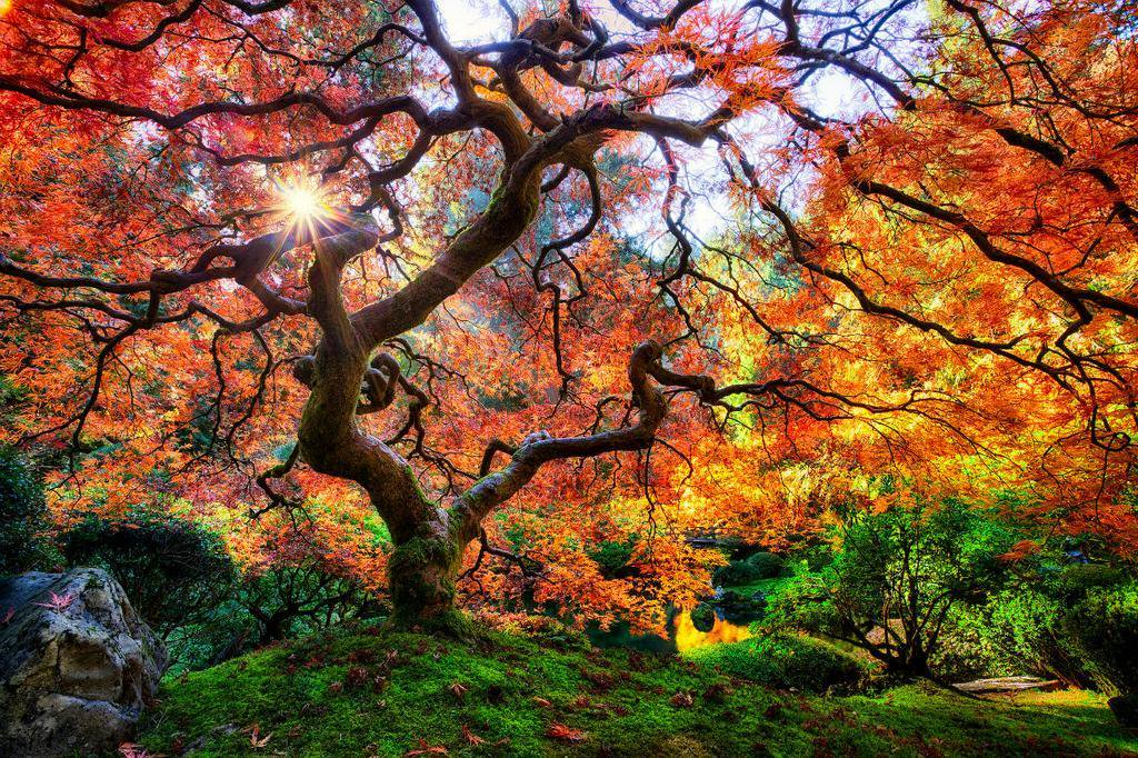 ポートランド日本庭園。オレゴン州、アメリカ