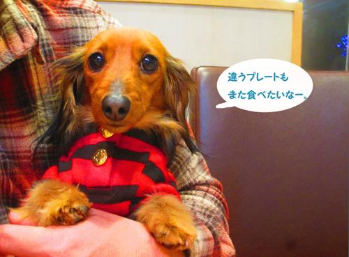 2016-2-daiba126.jpg