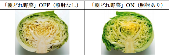朝どれ野菜室02