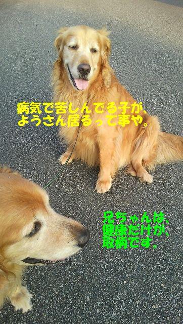 DCIM1106.jpg
