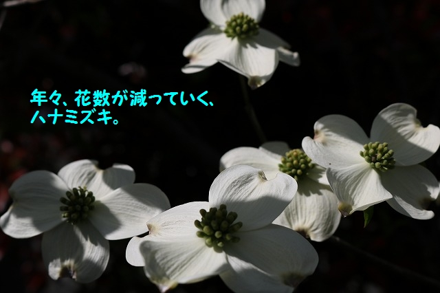 IMG_1817.jpg