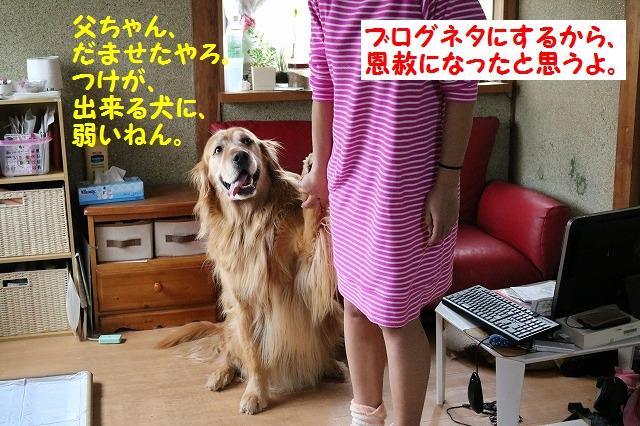 IMG_2508a.jpg