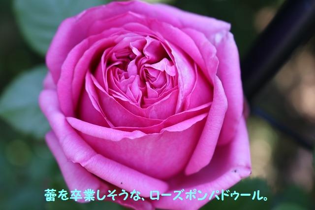 IMG_2786.jpg
