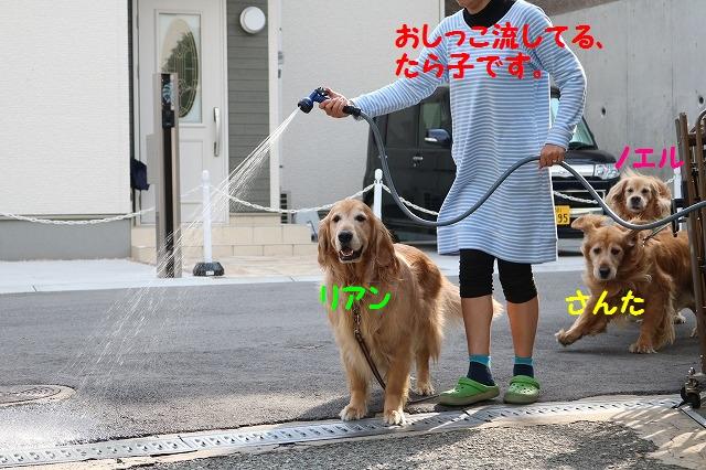 IMG_3215a.jpg