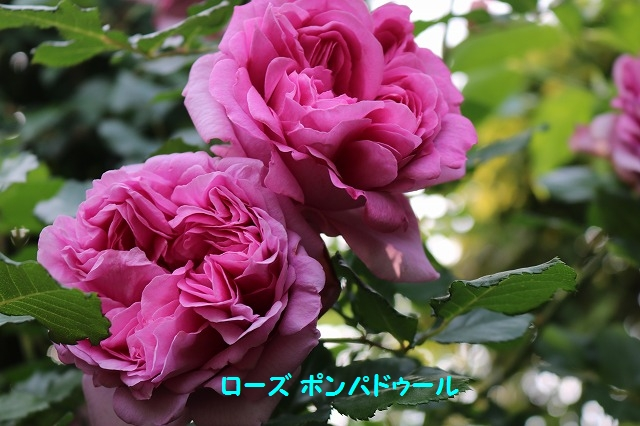 IMG_3323.jpg