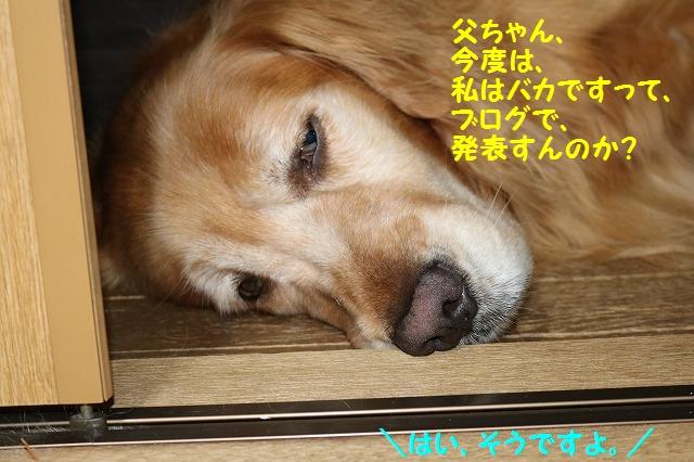 IMG_3486_2016051122020802e.jpg