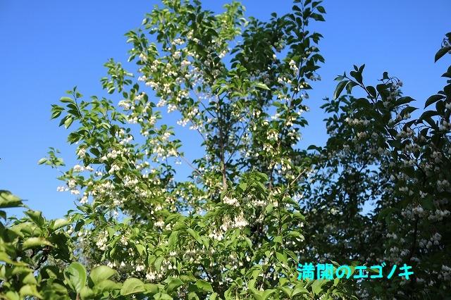 IMG_3596.jpg