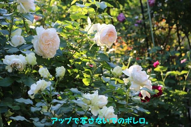 IMG_3603.jpg