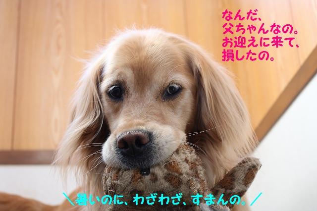 IMG_3698_20160514203256ed8.jpg