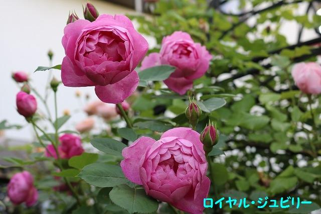 IMG_3708.jpg
