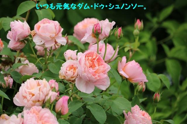IMG_3935.jpg
