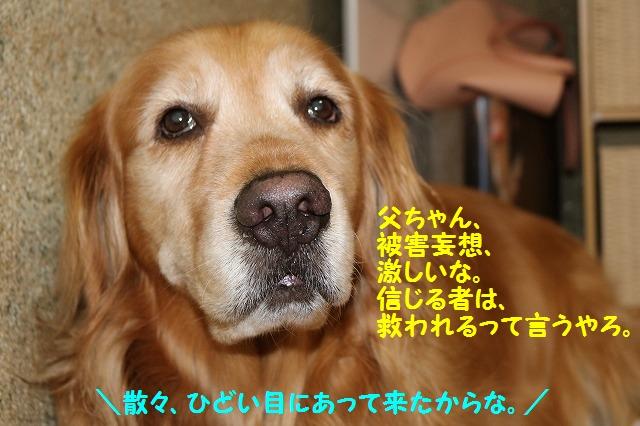 IMG_4097_20160518220446f7c.jpg