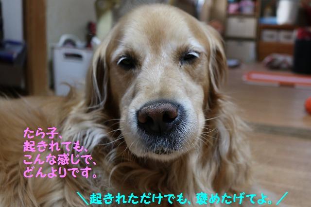 IMG_4199_201605192219303d9.jpg