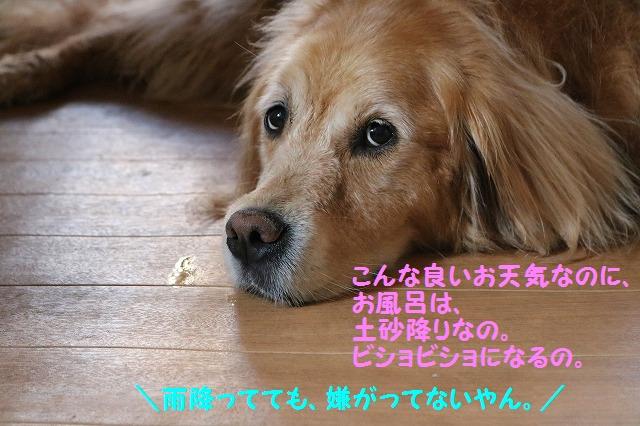 IMG_4443_20160522210318d37.jpg