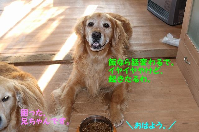 IMG_4531.jpg