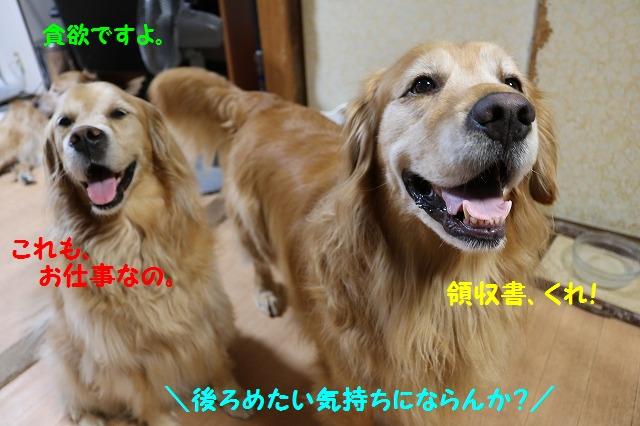 IMG_4662.jpg