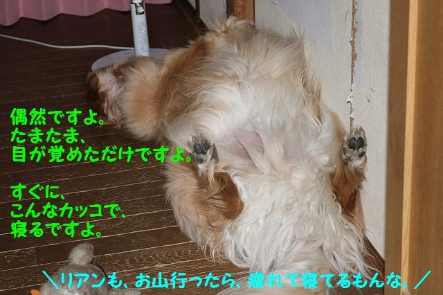 IMG_4693_20160526222744d89.jpg