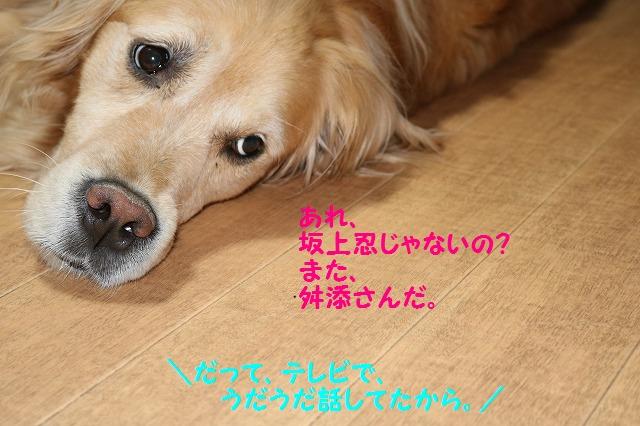 IMG_4698_20160527215732d25.jpg