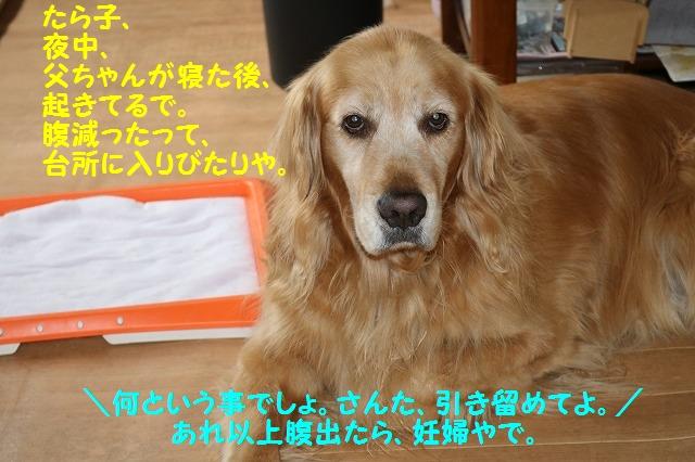 IMG_4750_20160528193946e27.jpg