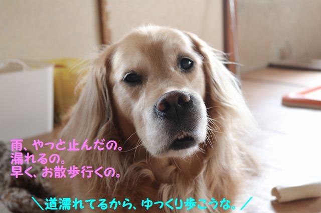 IMG_5460_20160605203926e42.jpg