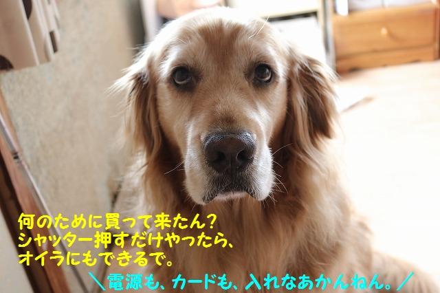 IMG_5489_201606052039450b4.jpg