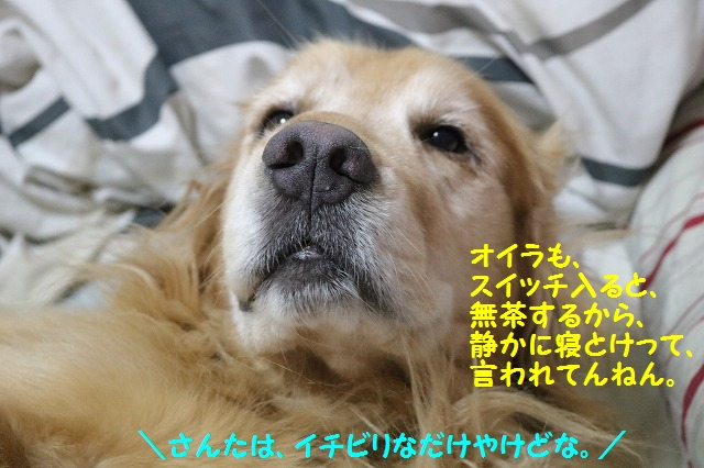 IMG_5617_2016060723185381c.jpg