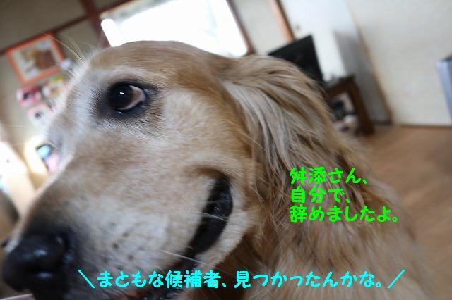 IMG_6339_20160615234452818.jpg