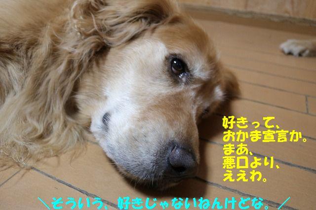 IMG_6475_20160617213345f0b.jpg