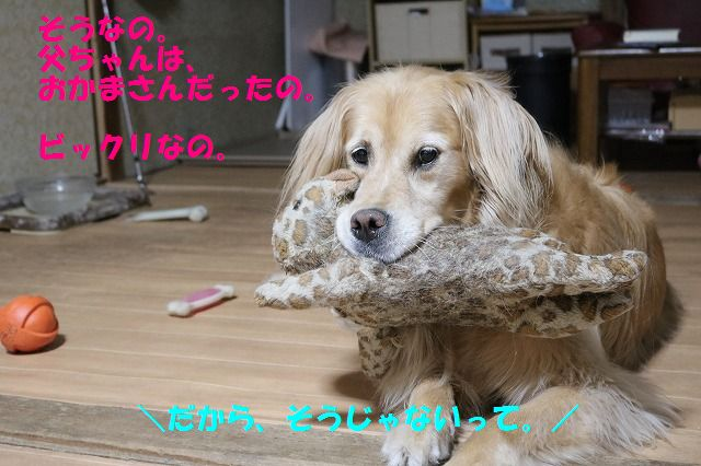 IMG_6510_20160617213425de0.jpg