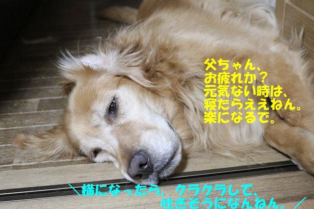 IMG_6534.jpg