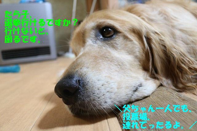 IMG_6875.jpg