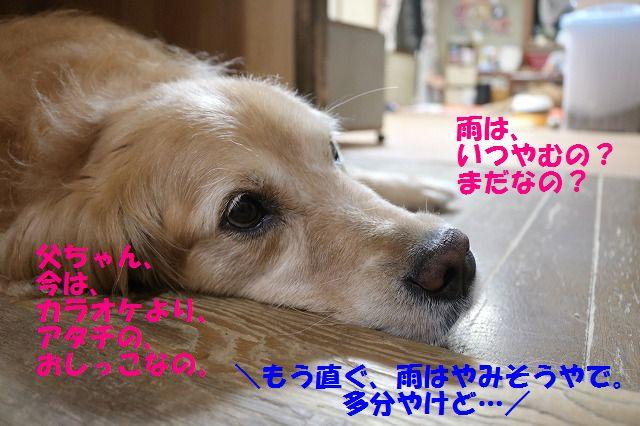 IMG_7024_20160624231522c59.jpg