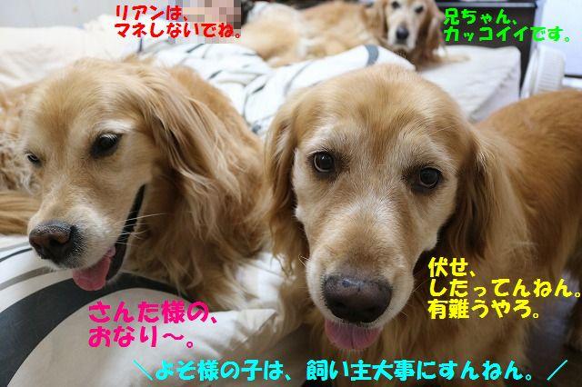 IMG_7423_201606272024151f1.jpg