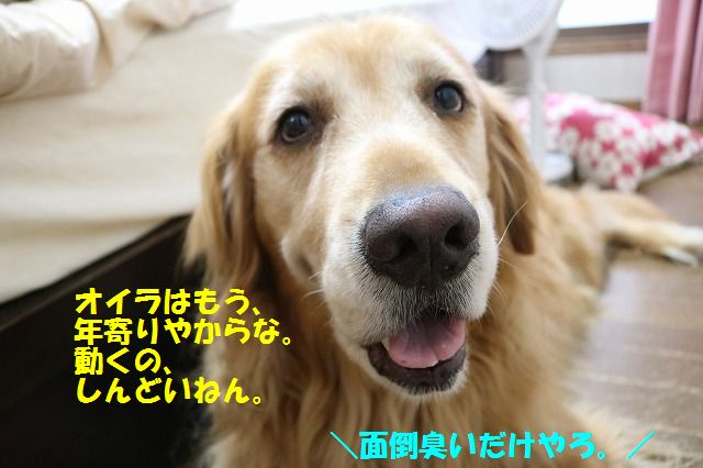 IMG_7431_20160627202419811.jpg