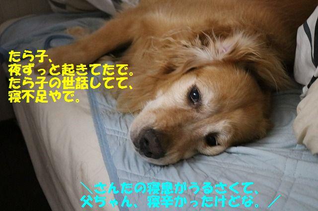 IMG_7616_20160629221050eb4.jpg