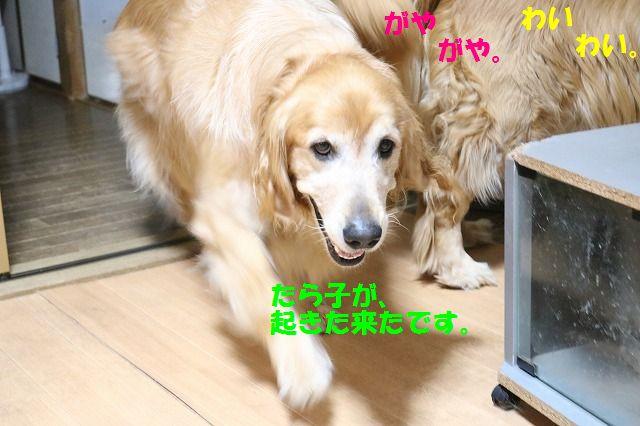IMG_7801_20160702205642c9a.jpg