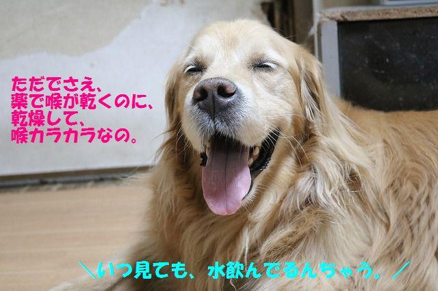 IMG_7896.jpg