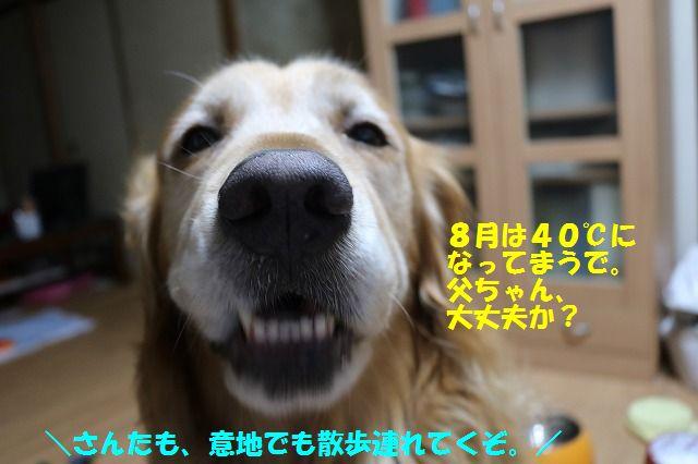 IMG_7942_20160705235353a43.jpg