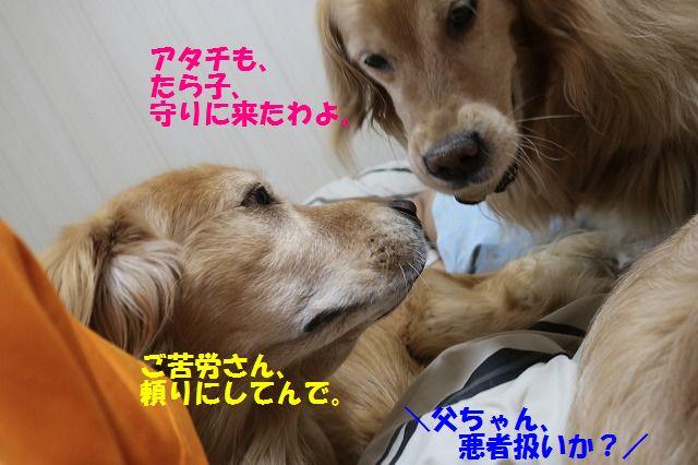 IMG_7977.jpg