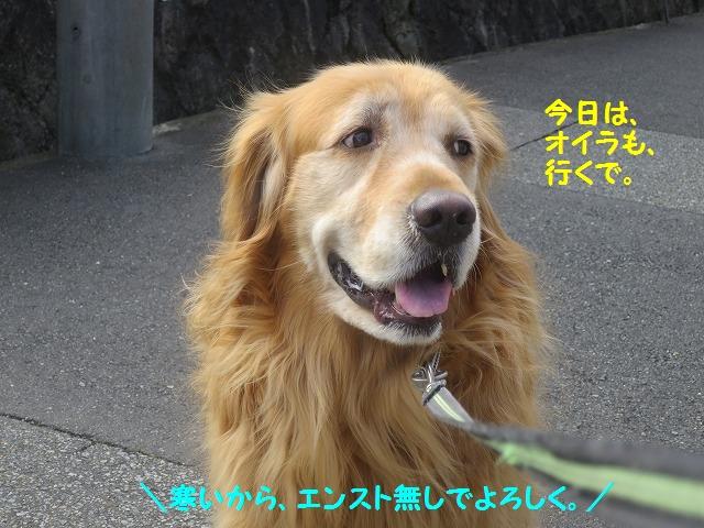IMG_8166_201604291900367ea.jpg