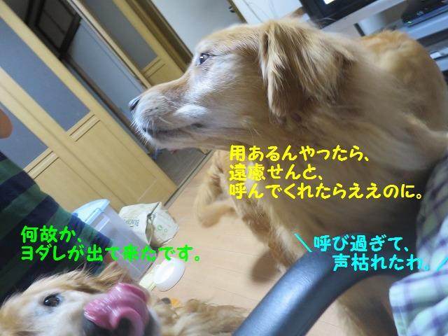 IMG_8251.jpg