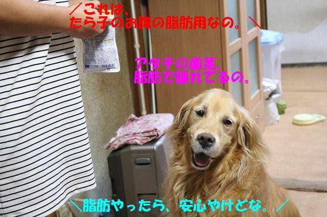 IMG_8262b.jpg