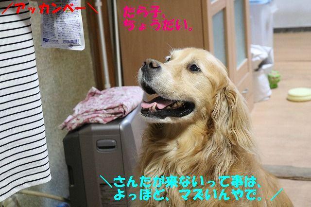IMG_8264c.jpg
